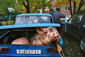A gypsy family is carrying home a slaughtered pig in their old Russian Lada. Velke Kapusany, 2004. © Andrej Balco