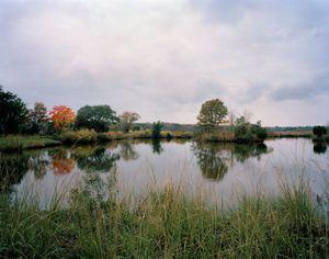 Retired Rice Field, Donnelly Wildlife Management Area                                                                             © Eliot Dudik