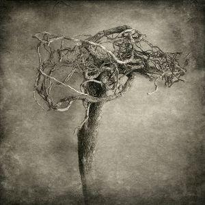 root© Gary