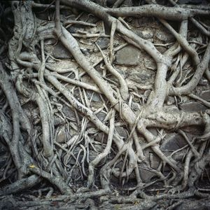 Roots and stones.