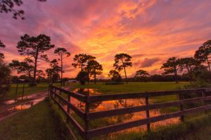 Sunset at Nail Farms