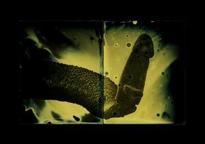 Schistosoma mansoni (male) © Marcus DeSieno