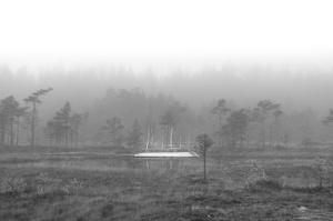 Soomaa - land of bogs III