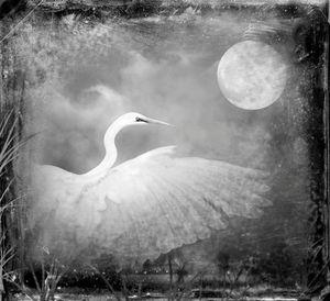 © Dianne Yudelson Snowy Egret