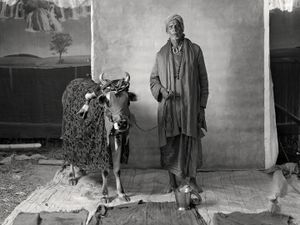HOLY (RITUALISTIC) BRAHMIN WITH DEFORMED COW, $20 WEEKLY, 2012 © Supranav Dash