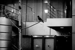Tokyo Blur #27