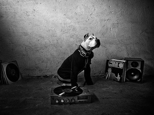 DOG is a DJ