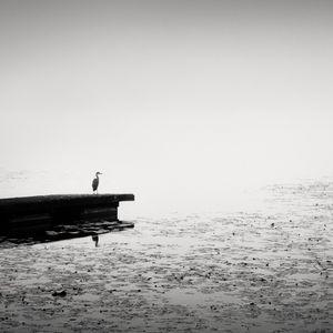 Oneiric Bird II © Frang Dushaj