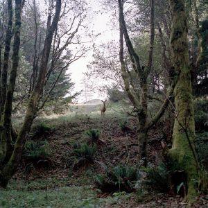 A doe deer looses its offspring in Ecola State Park, Oregon