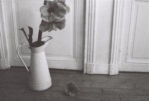 La fleur de Daniele,  2015