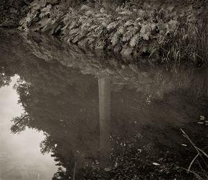 "Stable Pond, Powis Castle, Wales, 18.5x16"" Platinum Palladium © Beth Dow"