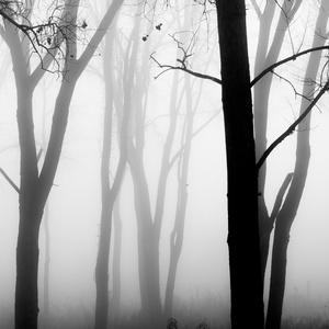 Forest Fog 7