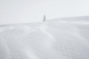 White_05