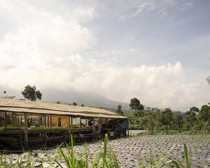 Nursery near Pasar Selo