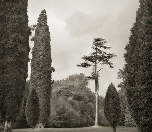 "Trees, Blenheim Palace, 18.5x16"" Platinum Palladium © Beth Dow"