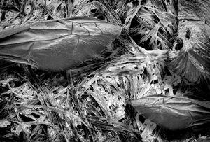 Paper Wasp Nest Fibers