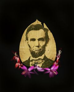 The Great Emancipator. Alexander Gardner's Lincoln in a host leaf with Christmas cactus blossoms.