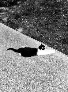 Stray Cat 12
