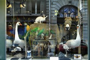 France, stuffed animals in a window