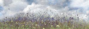 """Wildflower Storm"""