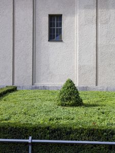 Topiary Cone