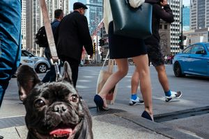 Street scene with a dog and lady's legs. Chicago, Illinois.
