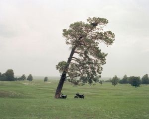 Tree and motobike, 2011