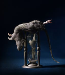 Rat and hourglass