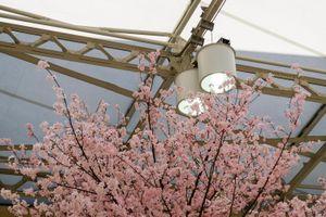 Tree, Ueno Station, Tokyo