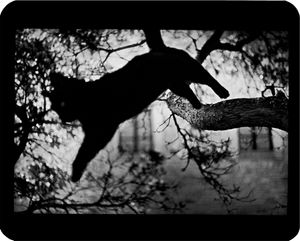 """Untitled"" (Cat Jumping), 2006 © Giacomo Brunelli"