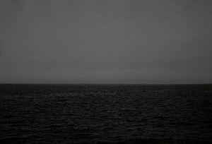 Inflorescences, 2002 © Timo Kelaranta