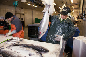 DOWNEAST SEAFOOD: 'Fish Frenzy'