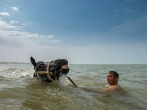 Azerbaijan, SumgaitA man swims with his horse in the Caspian Sea on a very hot day in Sumgait.© Petrut Calinescu