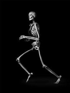 Human being. Homo sapiens. Worldwide. (h. 1,70 m) © Patrick Gries