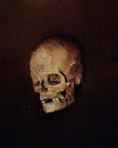"A Paltaniemi skull from 18th century. From the exhibition ""Kainuu"" © Maria Gallen-Kallela"