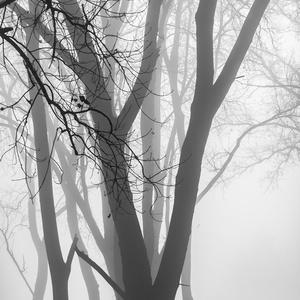Forest Fog 4