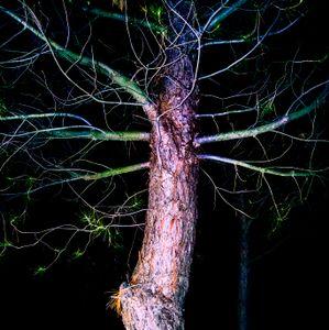 Tree Throb