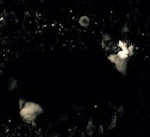Cat and Dandelion's Achene