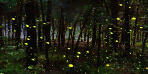 Firefly Forest Night