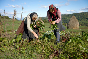 Gathering Produce