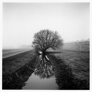 'Lynn Way'. 2013