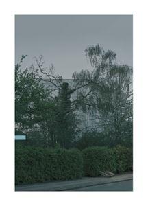 Behind Pollard Tree