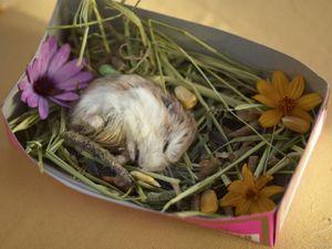 Hamster's Funeral
