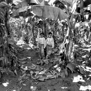 "Udit and Vidit, in their father's banana plantation, Raddu, Gujarat, 1998. From the series ""Twinspotting"" (Dewi Lewis Publishing, 1999). Photographs courtesy Ketaki Sheth and PHOTOINK"