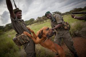 Anti-poaching Dog Team