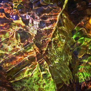 FOREST  CURRENT© Douglas A. Yates