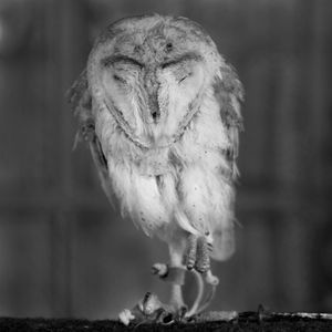 Rescue Owl © Anne Berry