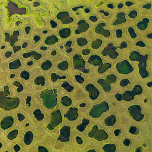 Lena Delta, Siberia, Russia. In the few weeks of Siberian summer, the permafrost ground in the Arctic Lena Delta thaws. A mosaic of lakes is built and the tundra vegetation around explodes into life.