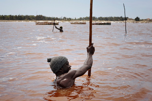 The saltminers scratch off the sedimented salt from the bottom of the lake using shovels and wooden sticks.