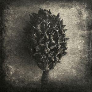 seed© Gary